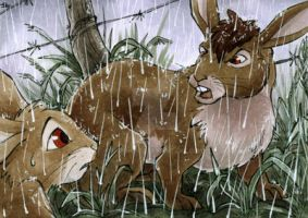 Rebuke - Watership Down - ATC by Merinid-DE