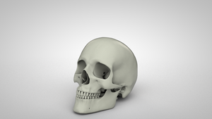 Softbody Skull (Animation) by NIKOMEDIA