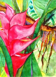 Red Heliconia by sabagirl