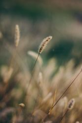 The Field of Reeds by Photometheus