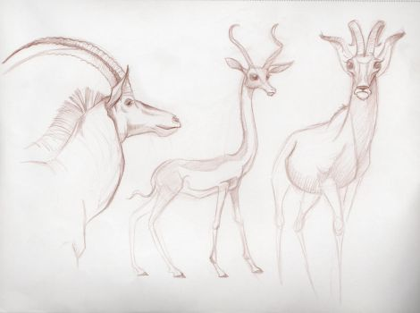 Gazelles by PodwojneD