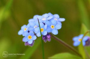 Blue Petals by sweetcivic