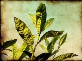 plant by Duophased