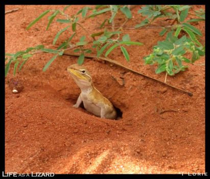 Life as a Lizard by T-Lorie
