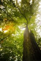 Under The Leaves by MarcoHeisler