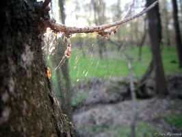 Spider web by Zlajda95
