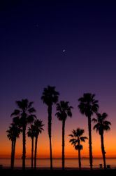 Palm Tree's View of a Sunset by KittyChick