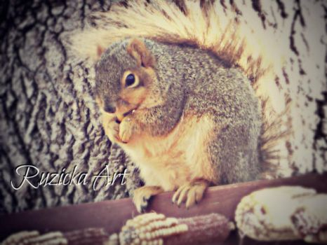 Fat Squirrel by iBelievedOnce