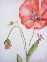 Red poppy by SargeCrys