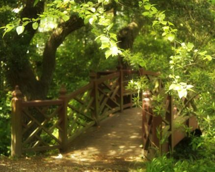 Bridge in the forest by midnight5