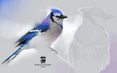 20160709 Blue White Bird Psdelux by psdeluxe