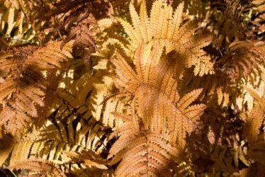 Flaming Ferns by FOTOSHOPIC