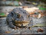 Toad by P1x1eDu5t
