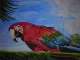 Parrot by Patty73