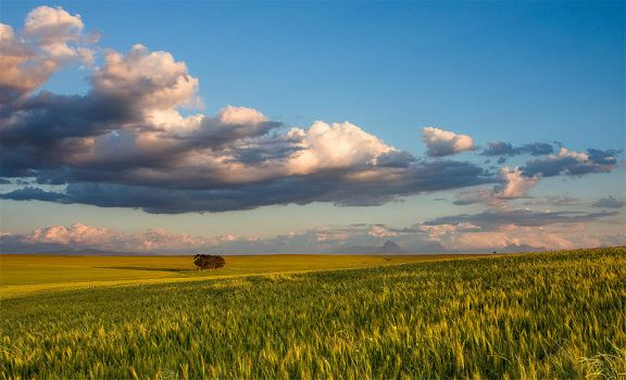 First Signs of Summer by hougaard