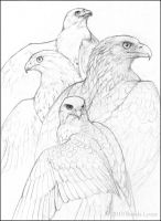 Four Raptors - Pencil by windfalcon