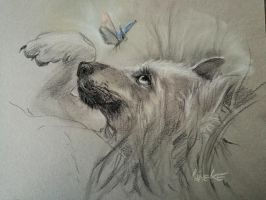 Wolf cub and butterfly by Lineke-Lijn