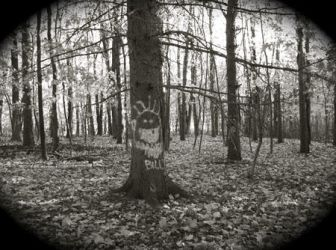 Worcester Woods 15 by scarygirl67
