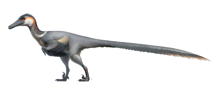 Austroraptor cabazai for Wikipedia by FredtheDinosaurman