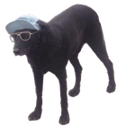 Extremley Cool Transparent Dog by catstitches