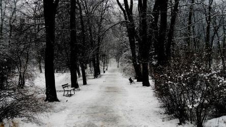 Winter by sathilia