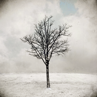 Simple Winter V by intao