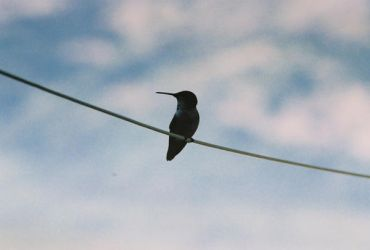 Bird on a Wire by nicoletaggart