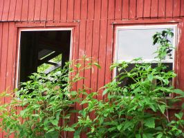 Out the Barn Window 1 by meljoy68