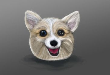 doge by ciliath