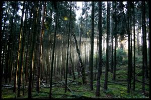 A Valley thick with Pines by Hluthvik
