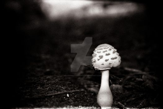Mushroom 2 by OrianiPhotography