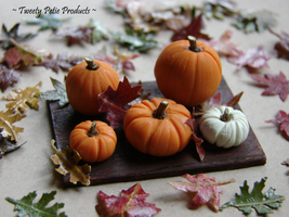 Perky Pumpkin Board by birdielover