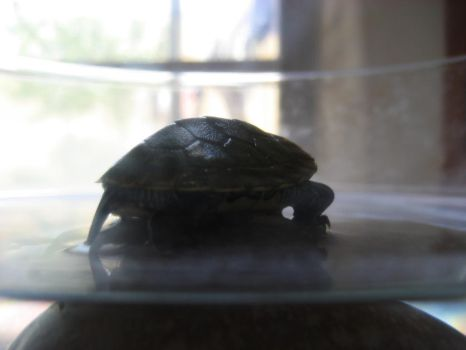 tiny green turtle 04 by turbosianor