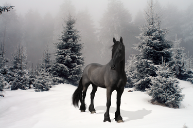 Friesian in the Snow by MogNetCentral