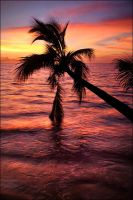 tropical sunset by elementality