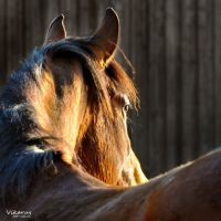 In the light by Vikarus