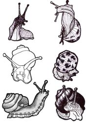 Sketches: snails by nancy-kelpie