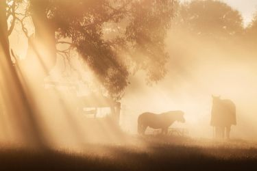 Mist and Morning Light by Equestrix