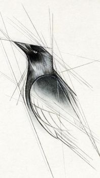 Jackdaw by Skia