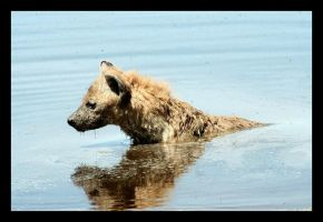 Hyena in Pool by KennaSeven