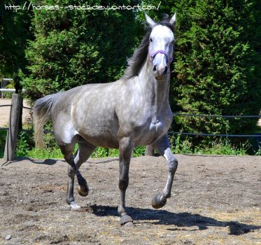 Calabria - Stock 8 by Horses--Stock