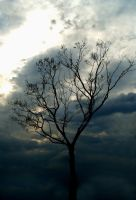 A Storm Is Coming by Plindisen