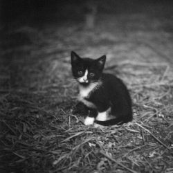kitty in black and white by Maurita