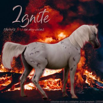 HEE Horse Artwork - Ignite by WildWillowHEE