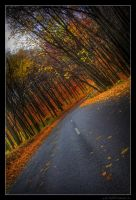 Road In To Autumn by miki3d