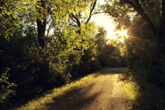 Nature Trail by JohnnyNiffer