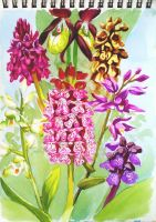 Orchids by MetAnnie