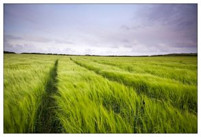 Fields of Wind by martinkaluza