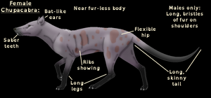 Chupacabra Anatomy by horse14t