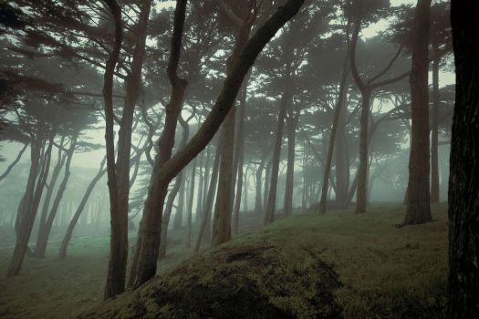 San Francisco woods by leventep
